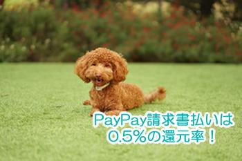 PayPay請求書払いのお得ポイントは0.5%の還元率